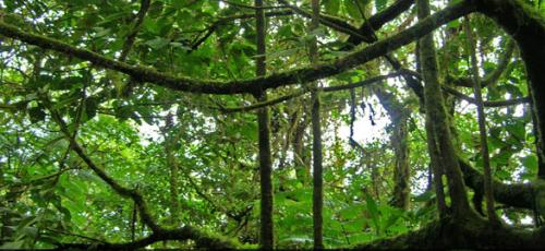 Ano Internacional dos Bosques