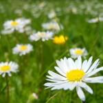 A primavera: peneira de recursos