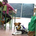 Lupa e Moka, a vixilancia anti-diabete de dúas cadeliñas nas aulas